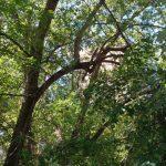 В Раменском очищают электрические провода от веток деревьев